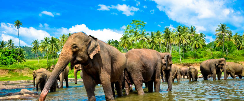 GolfHoliday, Hill country, Wildlife & Beach in Sri Lanka