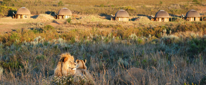 Best-of-City-and-Safari-South-Africa