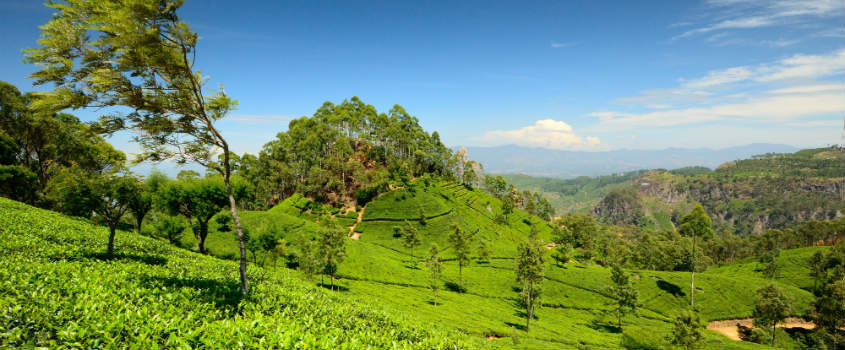 Golf-Holiday-Packages-in-the-Highlands-Nuwara Eliya